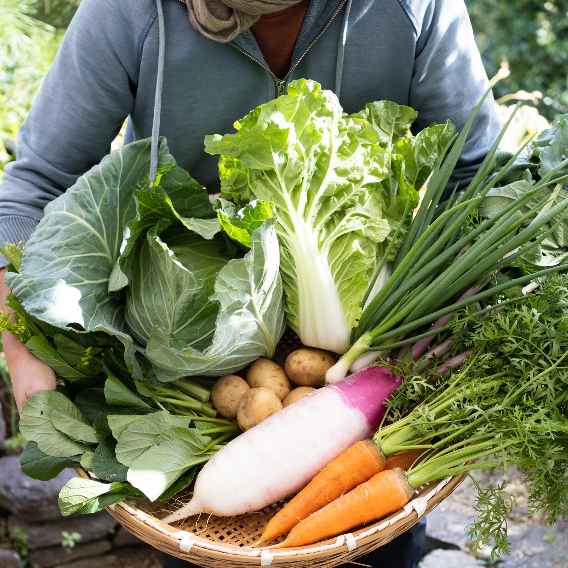 冬の旬野菜セット