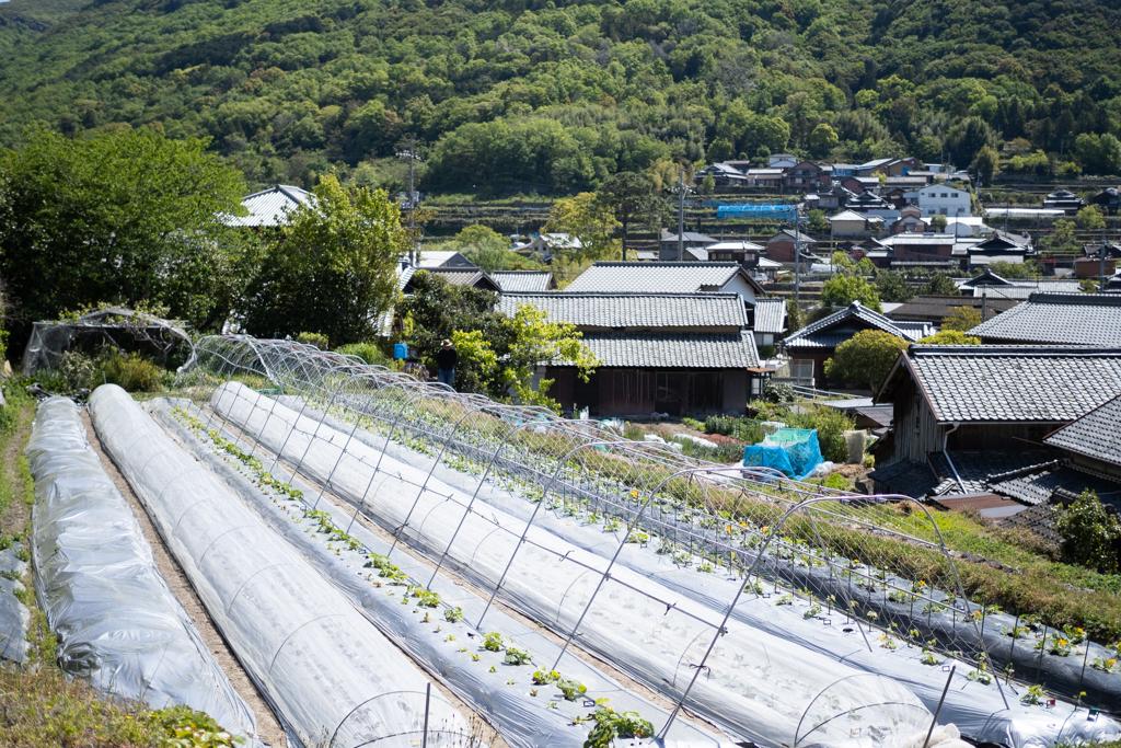 小豆島の畑