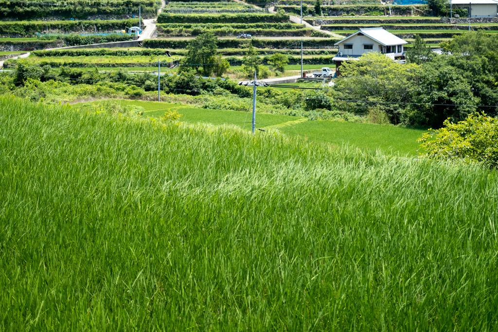 初夏の小豆島、緑色の風景